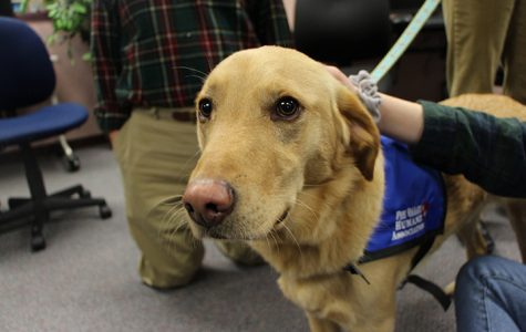 Pets help North students de-stress during finals